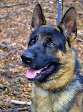 Il Ministero della Giustizia Dipartimento dell'Amministrazione Penitenziaria Nucleo Centrale Cinofili sostiene il progetto volto al benessere del cane poliziotto.
