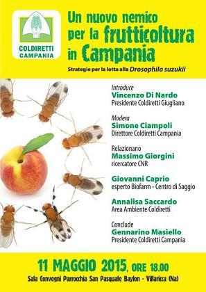 Coldiretti: Un nuovo nemico per la frutticoltura in Campania, strategie per la lotta alla Drosophila suzukii