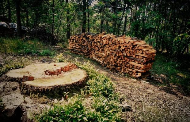 Anticipazione pagamento spettanze agli operai forestali dall'Ente Provincia