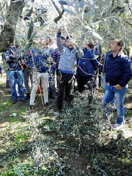 Corso Potatura Olivo. Coldiretti Campania: Il successo conferma il trend positivo
