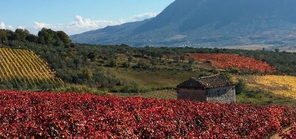 Pianificazione Urbanistica per una viticoltura di qualità