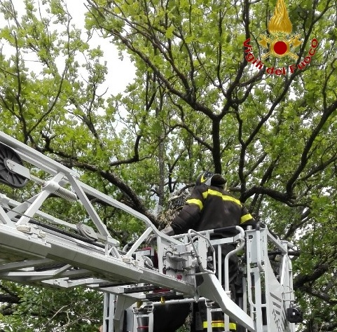 San Nicola Manfredi: Vigili del Fuoco all'opera per il recupero di piante di sostanza stupefacente