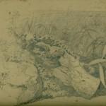 schizzo vianelli 1841