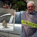 Polizia Provinciale di Benevento: fine del servizio di consegna della fauna ferita
