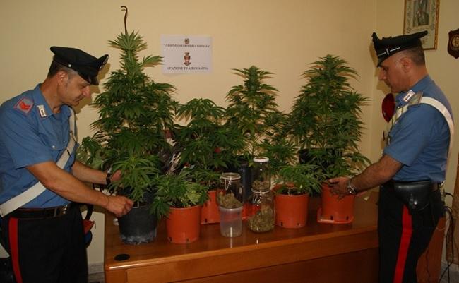 Airola: coltivava Marijuana in casa. Arrestato un architetto del luogo.