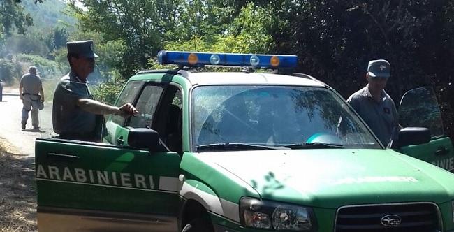 Tutela e sicurezza dei consumatori.Controlli dei Carabinieri Forestale di bestiame privo di documentazione prevista dalla Legge.
