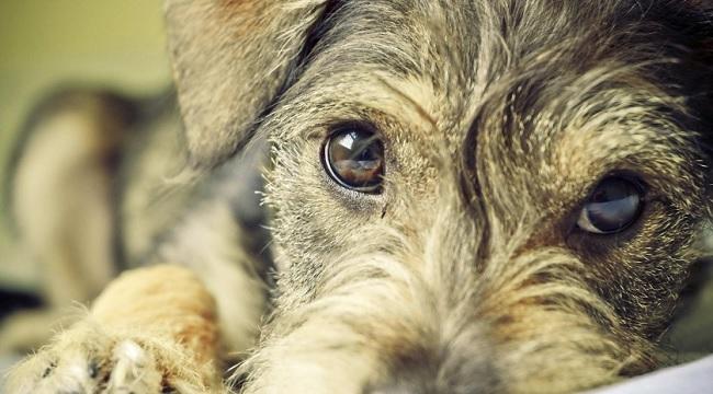 Anagrafe Canina a Telese Terme la microchippatura gratuita dei cani