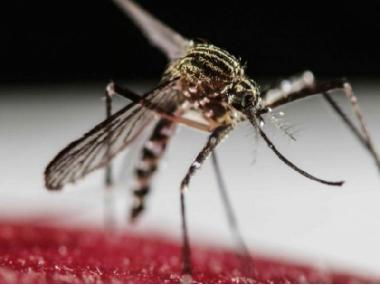 Zanzare contro zanzare. Parte la sperimentazione sul campo negli USA.
