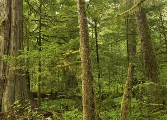 Provincia. Approvate le schede di progetto per gli interventi di riforestazione