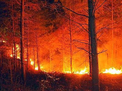 Claudio Ricci interviene sugli incendi che stanno interessando i boschi della provincia