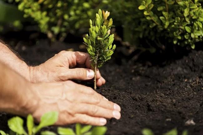 Tempeste, abbattimenti e incarichi….Intervento di Altrabenevento sulla questione degli alberi.