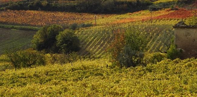 """Guardia Sanframondi: finanziato il""""Progetto BIOWINE BIOlogical Wine Innovative Environment"""""""