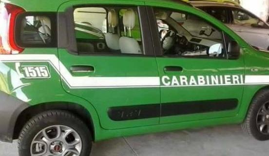Gruppo Carabinieri Forestale di Benevento. Accertate gravi carenze in una ditta di ristorazione di San Nicola Manfredi