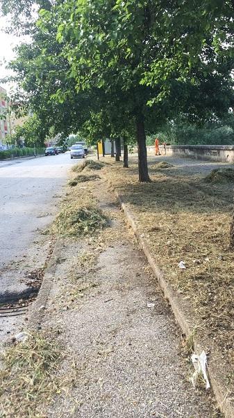 """Angelo Feleppa : """"In corso i lavori di manutenzione ordinaria per la pulizia e lo sfalcio delle aree verdi, dei cordoli e dei marciapiedi"""""""