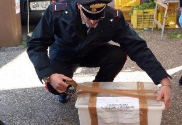 Benevento. I Carabinieri Forestali intensificano i  controlli nella filiera agroalimentare