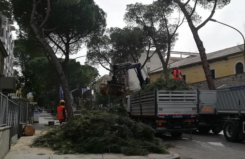 """Questione taglio pini. Reale : """" L'esperto dice che i pini rappresentano un pericolo in caso di allerta meteo"""""""