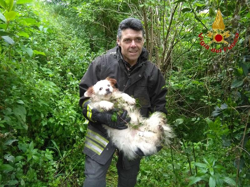 Pannarano, cagnolino caduto in un dirupo salvato dai Vigili del Fuoco