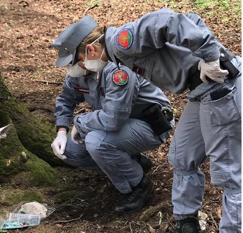 Parco Regionale del Taburno: I Carabinieri Forestali Rinvengono Carcassa Avvelenata.