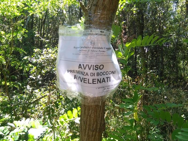 San Salvatore Telesino: Rinvenute dai Carabinieri Forestale esche avvelenate
