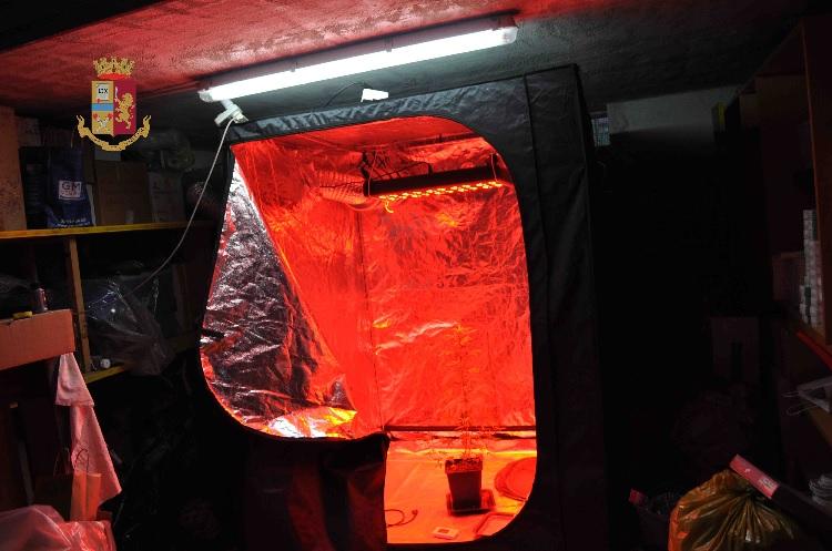 Telese Terme. Trasforma proprio garage in una serra per coltivare marijuana. Arrestato