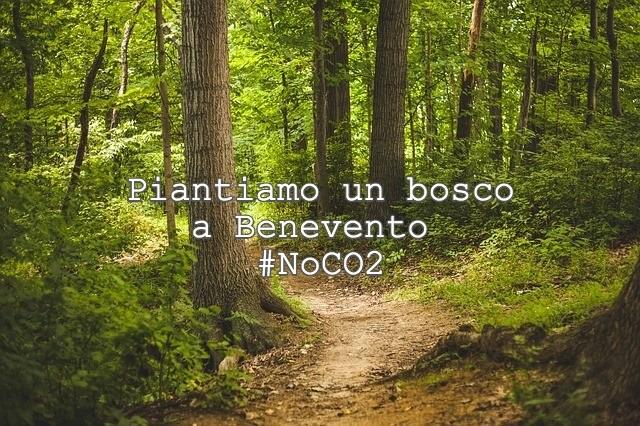 """Da Angela Del Grosso sui social una proposta a Mastella : """"piantiamo un bosco a #Benevento in un'area demaniale"""""""