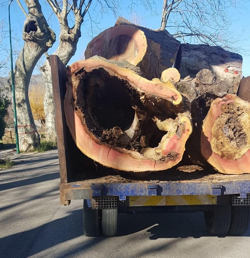 Airola, abbattuti tre alberi