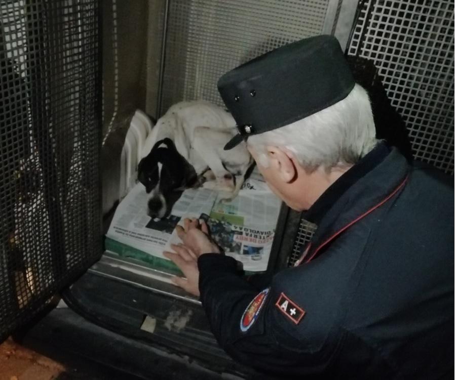 Paduli: sequestro di cuccioli di cani, erano malnutriti e feriti.Denunciato il proprietario.