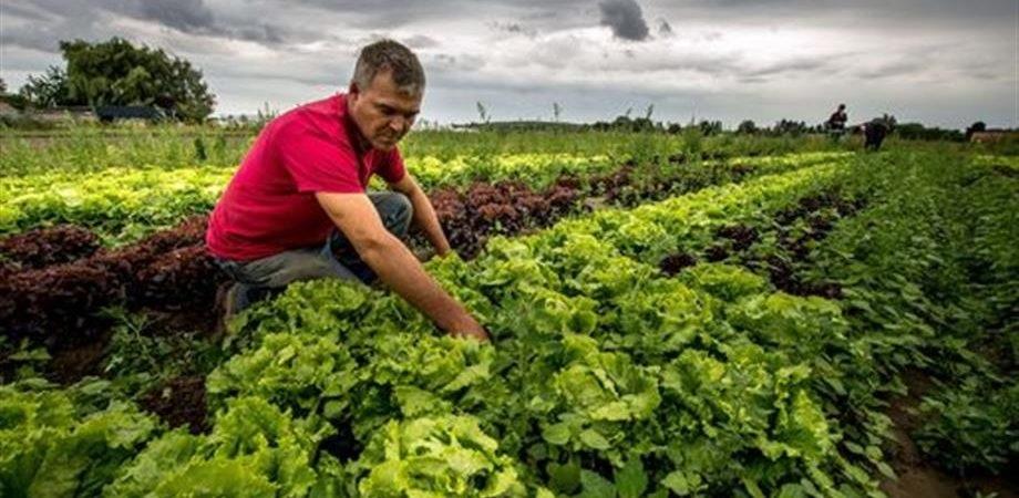 Comunità Montana del Fortore, presentata all'INPS la domanda di integrazione salariale per i lavoratori agricoli