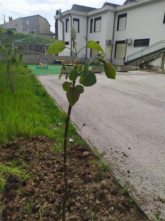 Guardia Sanframondi (Bn): Il Circolo Viticoltori in collaborazione con il Comune e la Scuola dell'Infanzia pianta alberi