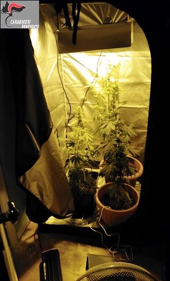 Apice: coltivava alcune piante di marijuana nel proprio garace.Arrestato 23 del luogo