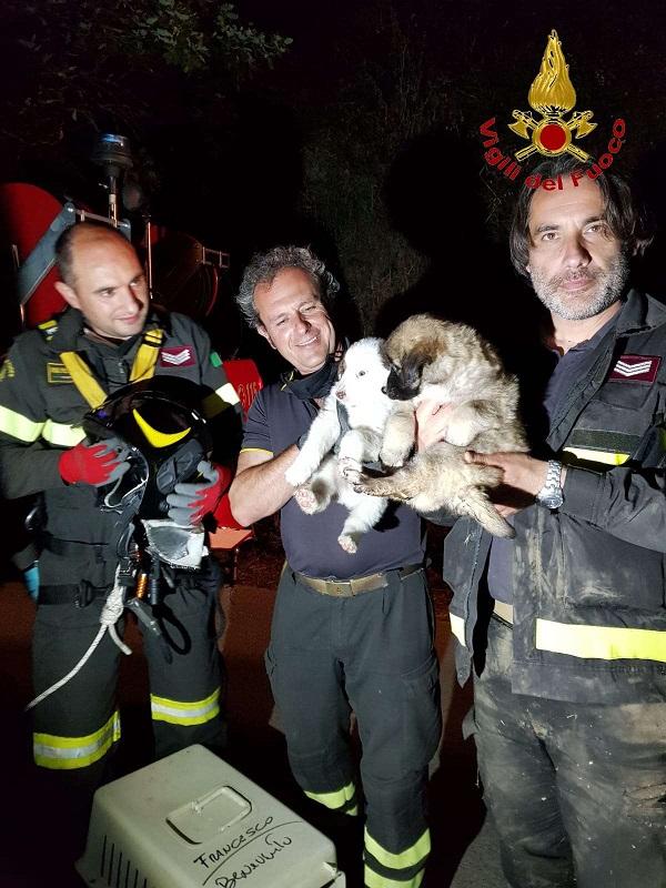 Vigili del Fuoco salvano 2 cuccioli abbandonati