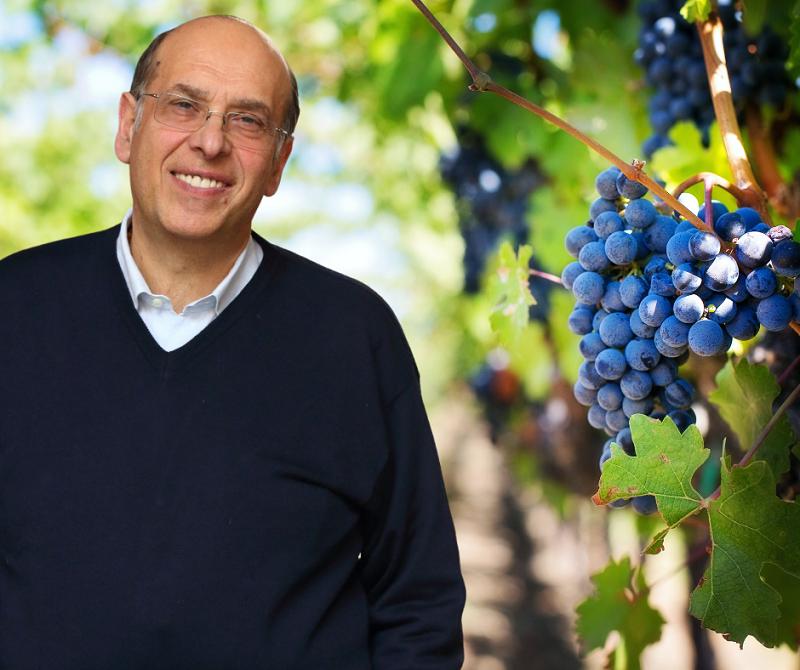 """Errico(Campania Libera):""""basta speculazioni sui prezzi delle uve! Al fianco degli agricoltori"""""""