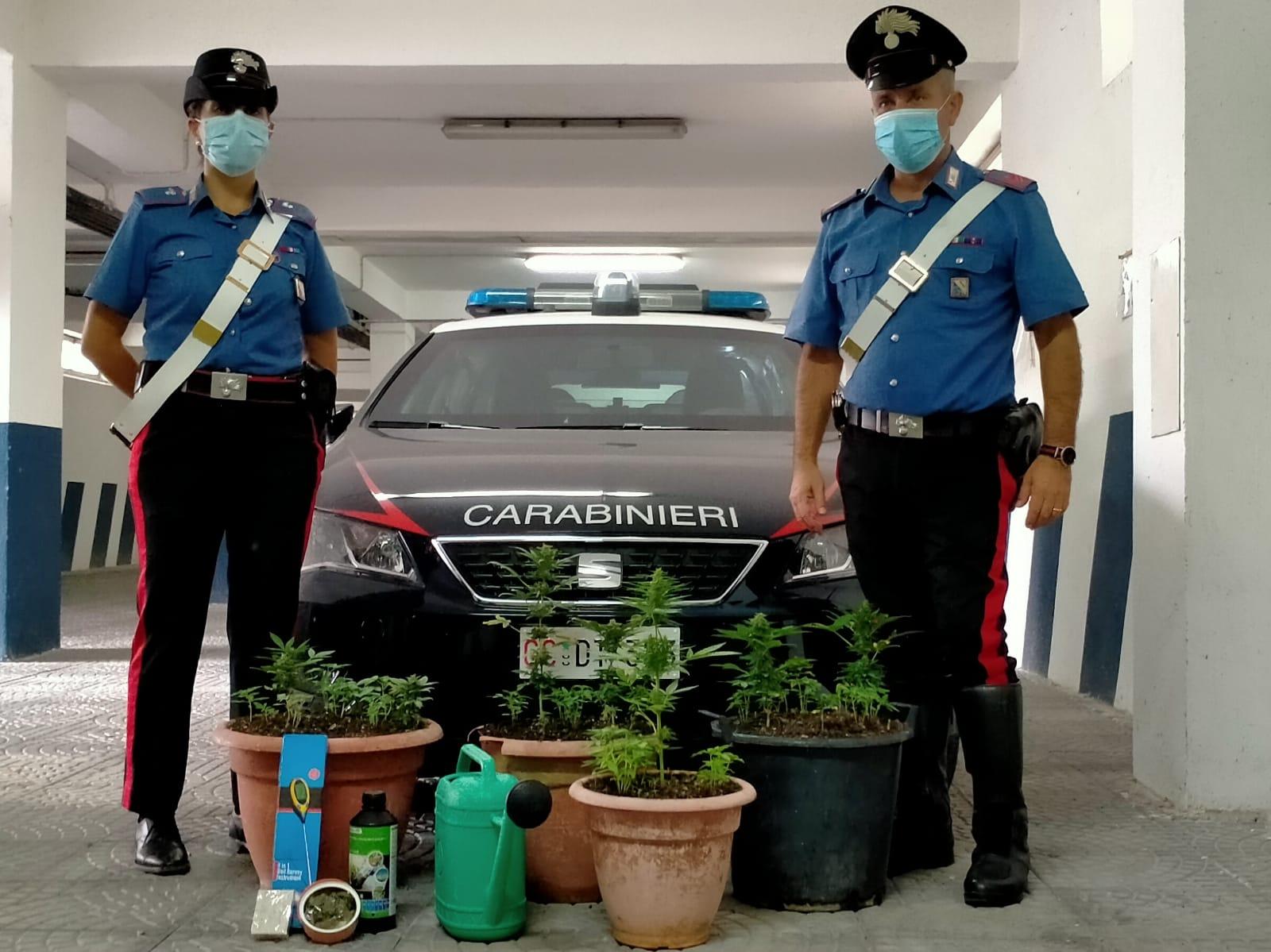 Due uomini denunciati per coltivazione di piante di marijuana e detenzione illegale di sostanza stupefacenti