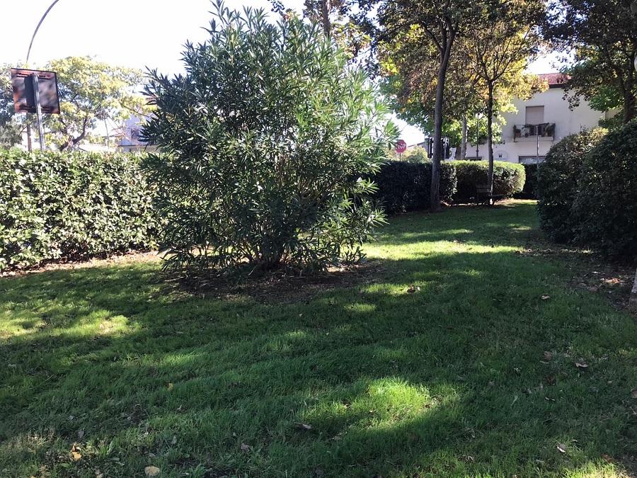 Al via l'attività di riqualificazione degli spazi verdi a Telese Terme.