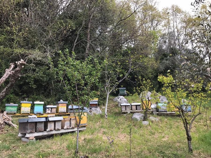 Giornata della Terra, le api, sentinelle dell'ambiente, nel cuore delle 4 AC di EarthBeat