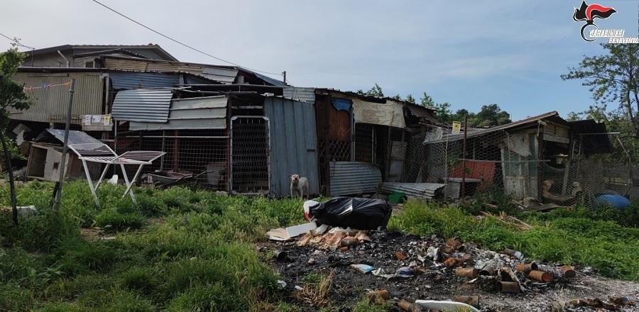 Maltrattamento di animali. Denunciati marito e moglie e sequestrata l'area dove erano custoditi 43 cani