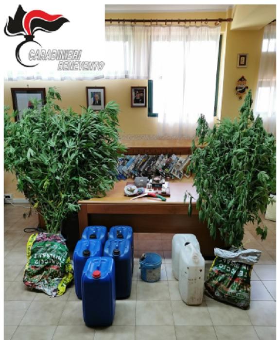 Cusano Mutri. Carabinieri in perlustrazione del territorio scoprono coltivazione di marijuana