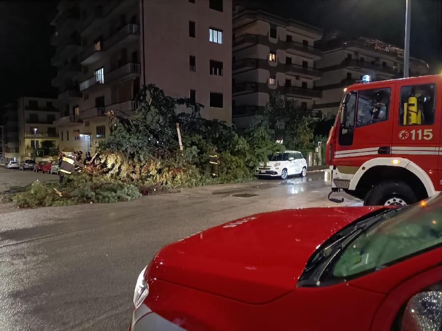 Il Maltempo flagella il Sannio. A Benevento albero su due auto parcheggiate