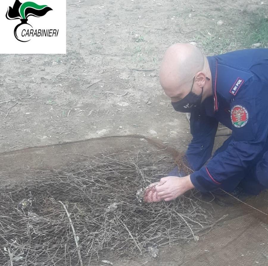 """Avevano catturato cinquantacinque animali da gabbia in località """"Recupo""""a San Giorgio del Sannio. Denunciate due persone"""